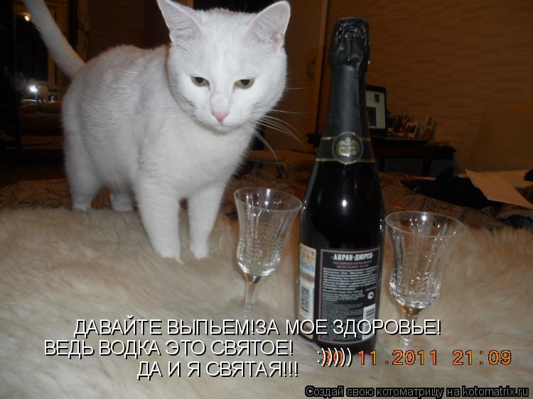Котоматрица: ДАВАЙТЕ ВЫПЬЕМ!ЗА МОЕ ЗДОРОВЬЕ! ВЕДЬ ВОДКА ЭТО СВЯТОЕ! ДА И Я СВЯТАЯ!!! :)))))