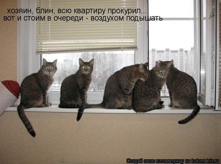 Котоматрица: хозяин, блин, всю квартиру прокурил...вот и стоим в очереди - воздухом подышать хозяин, блин, всю квартиру прокурил... вот и стоим в очереди - во