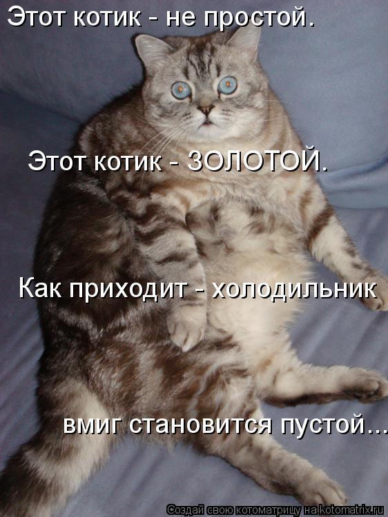 Котоматрица: Этот котик - не простой. Этот котик - ЗОЛОТОЙ.  Как приходит - холодильник  вмиг становится пустой...