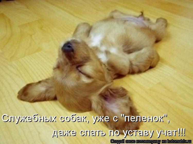 """Котоматрица: Служебных собак, уже с """"пеленок"""", даже спать по уставу учат!!!"""