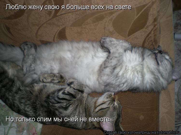Котоматрица: Люблю жену свою я больше всех на свете Но только спим мы сней не вместе