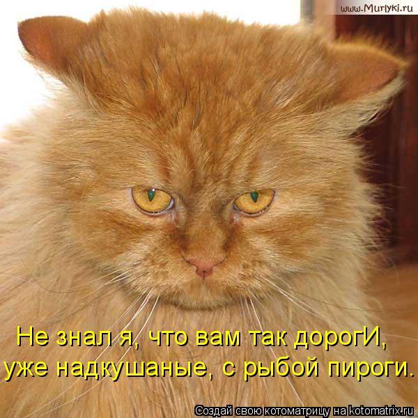 Котоматриця!)))) - Страница 9 1052288