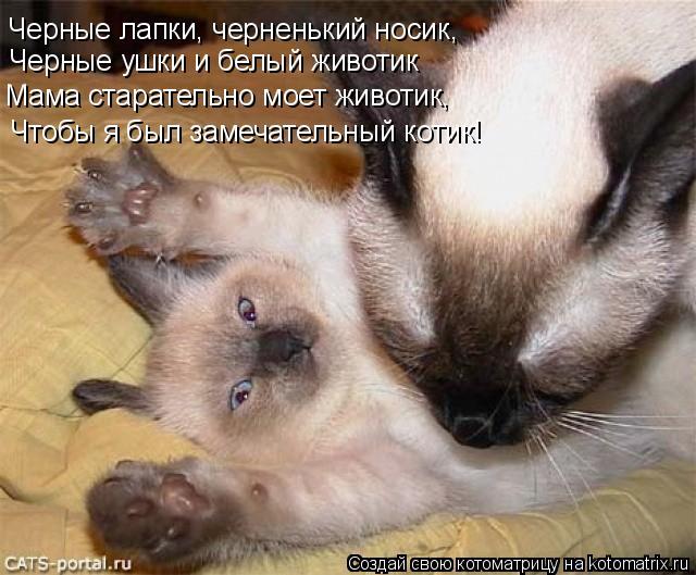 Котоматрица: Черные лапки, черненький носик, Черные ушки и белый животик Мама старательно моет животик, Чтобы я был замечательный котик!
