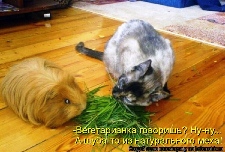 Котоматрица: А шуба-то из натурального меха! -Вегетарианка говоришь? Ну-ну...