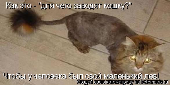 """Котоматрица: Как это - """"для чего заводят кошку?"""" Чтобы у человека был свой маленький лев!"""