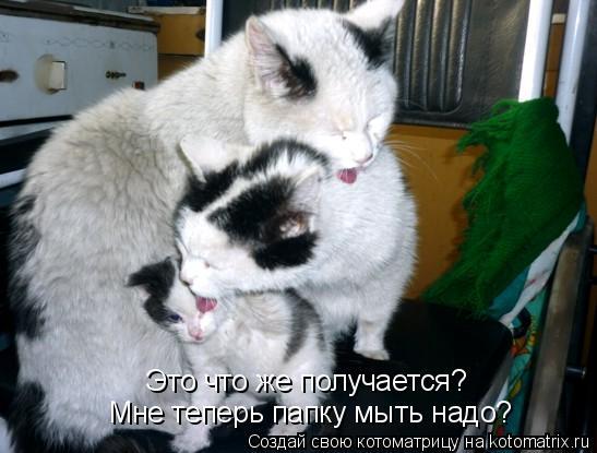 Котоматрица: Это что же получается? Мне теперь папку мыть надо?