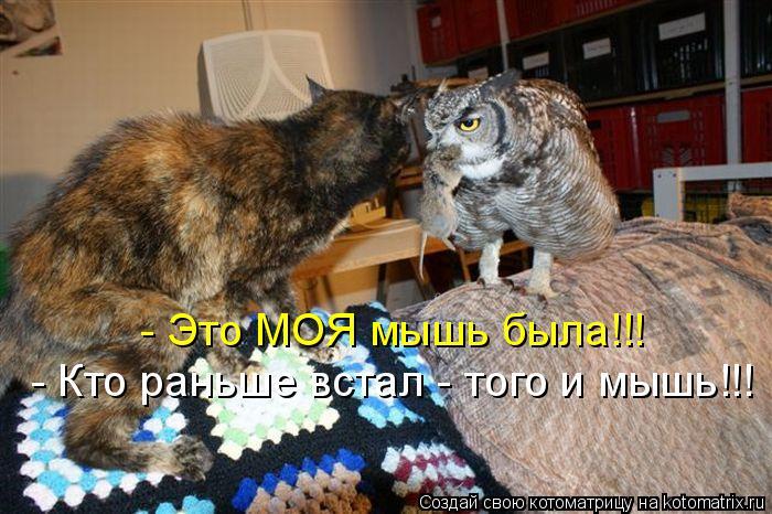 Котоматрица: - Это МОЯ мышь была!!! - Кто раньше встал - того и мышь!!!
