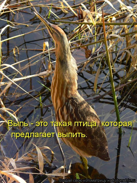 Котоматрица: Выпь - это такая птица, которая предлагает выпить.