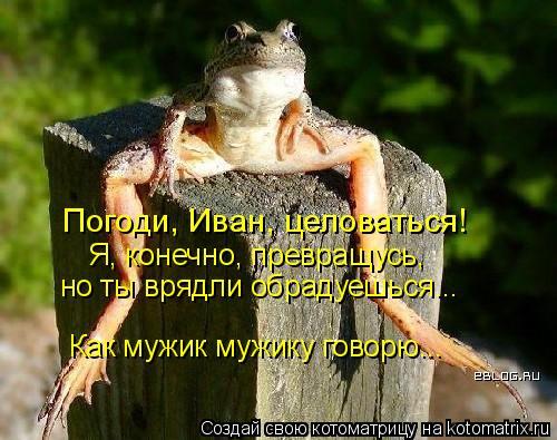Котоматрица: Погоди, Иван, целоваться! Я, конечно, превращусь, но ты врядли обрадуешься... Как мужик мужику говорю...