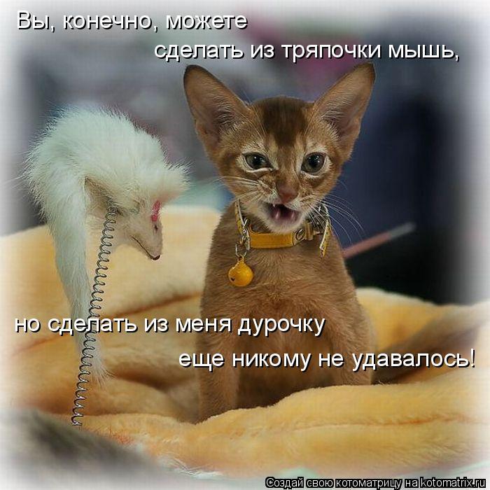 Котоматрица: Вы, конечно, можете сделать из тряпочки мышь, но сделать из меня дурочку еще никому не удавалось!