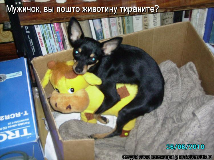 Котоматрица: Мужичок, вы пошто животину тираните?