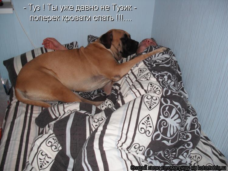 Котоматрица: - Туз ! Ты уже давно не Тузик - поперек кровати спать !!!....