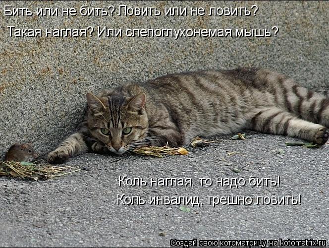 Котоматрица: Бить или не бить? Ловить или не ловить? Такая наглая? Или слепоглухонемая мышь? Коль наглая, то надо бить!   Коль инвалид, грешно ловить!