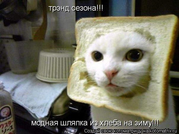 Котоматрица: трэнд сезона!!! модная шляпка из хлеба на зиму!!!