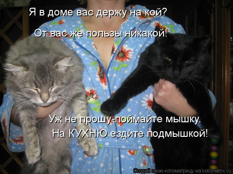 Котоматрица: Я в доме вас держу на кой? От вас же пользы никакой! Уж не прошу-поймайте мышку. На КУХНЮ ездите подмышкой!