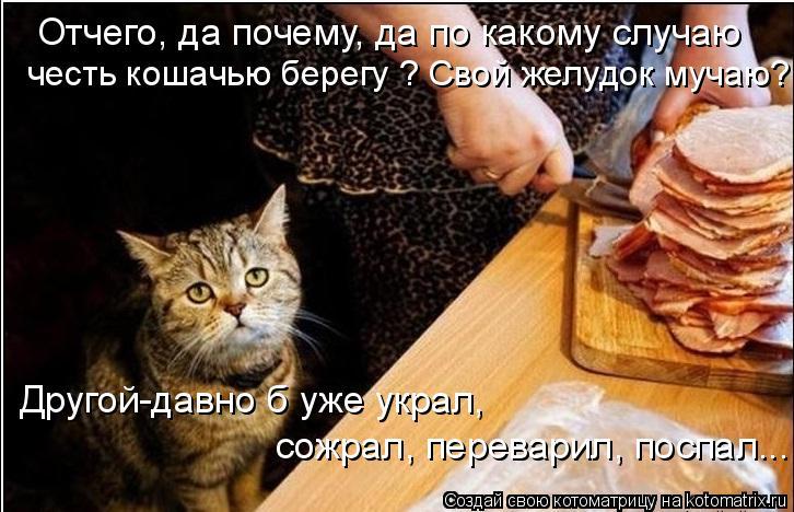 Котоматрица: Отчего, да почему, да по какому случаю честь кошачью берегу ? Свой желудок мучаю? Другой-давно б уже украл,  сожрал, переварил, поспал...