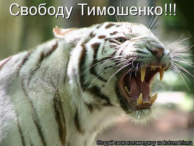 Котоматрица: Свободу Тимошенко!!!