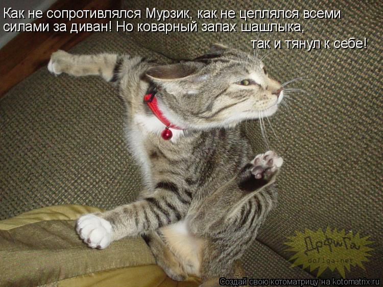 Котоматрица: Как не сопротивлялся Мурзик, как не цеплялся всеми силами за диван! Но коварный запах шашлыка,  так и тянул к себе!