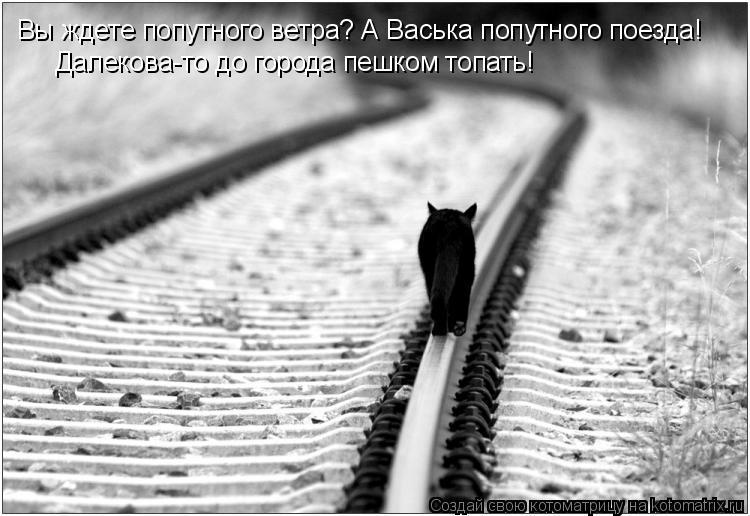 Котоматрица: Вы ждете попутного ветра? А Васька попутного поезда! Далекова-то до города пешком топать!