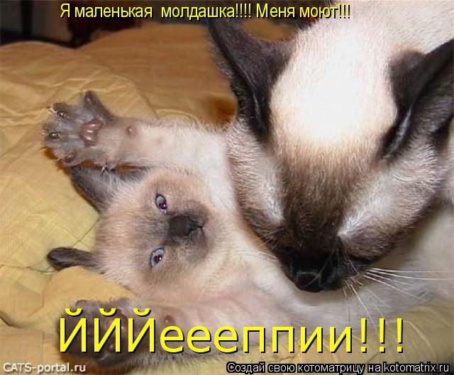Котоматрица: Я маленькая  молдашка!!!! Меня моют!!!  ЙЙЙеееппии!!!
