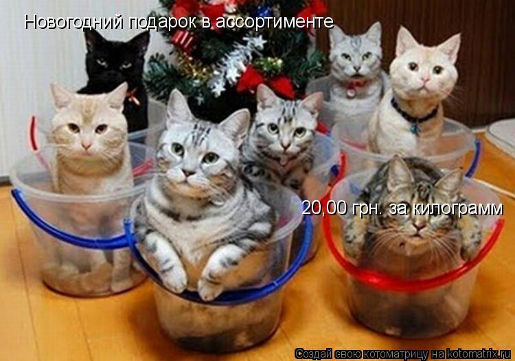 Котоматрица: Новогодний подарок в ассортименте 20,00 грн. за килограмм