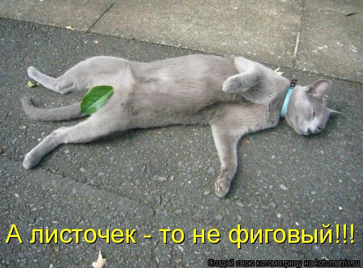 Котоматрица: А листочек - то не фиговый!!!