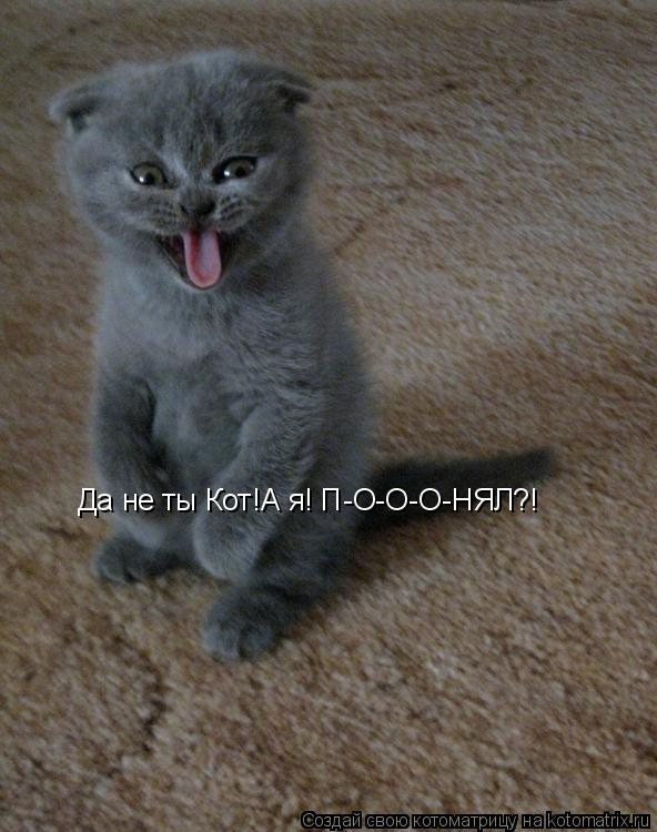 Котоматрица: Да не ты Кот!А я! П-О-О-О-НЯЛ?!