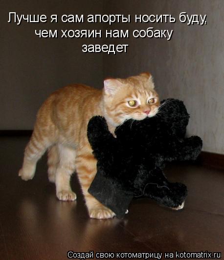 Котоматрица: Лучше я сам апорты носить буду, чем хозяин нам собаку  заведет
