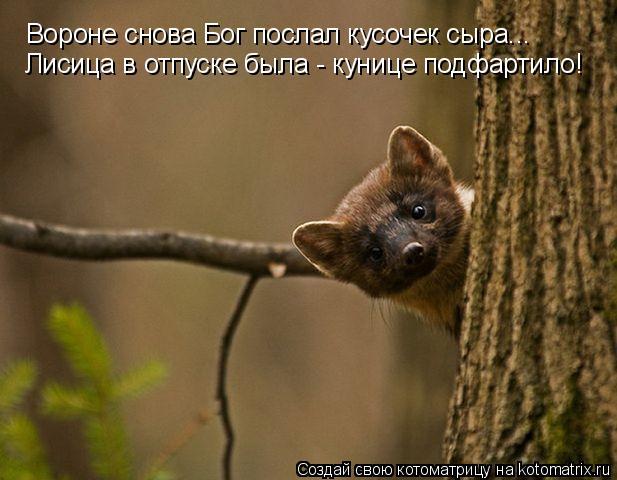 Котоматрица: Вороне снова Бог послал кусочек сыра... Лисица в отпуске была - кунице подфартило!