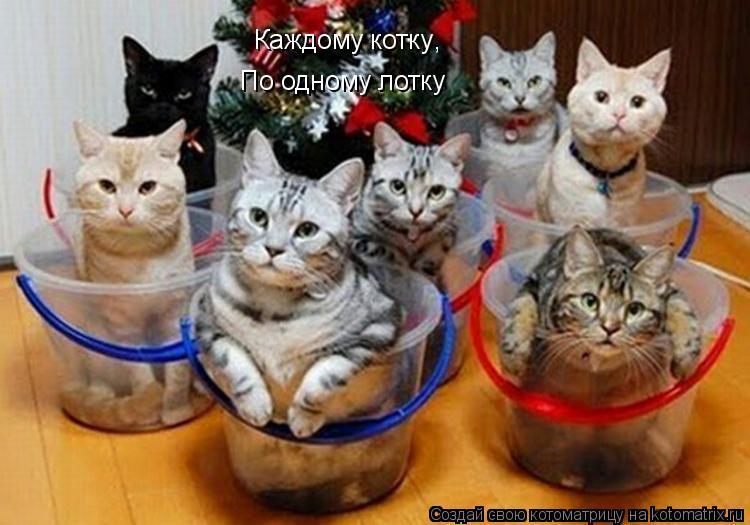 Котоматрица: Каждому котку По одному лотку ,