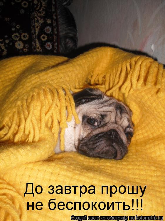 Котоматрица: До завтра прошу  не беспокоить!!!