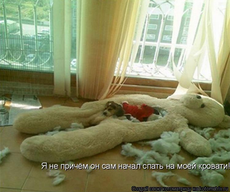 Котоматрица: Я не причём он сам начал спать на моей кровати!