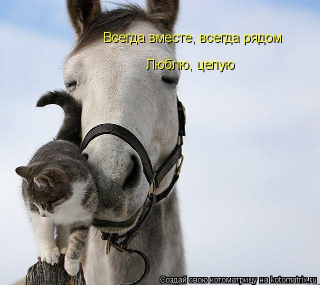 Котоматрица: Всегда вместе, всегда рядом Люблю, целую