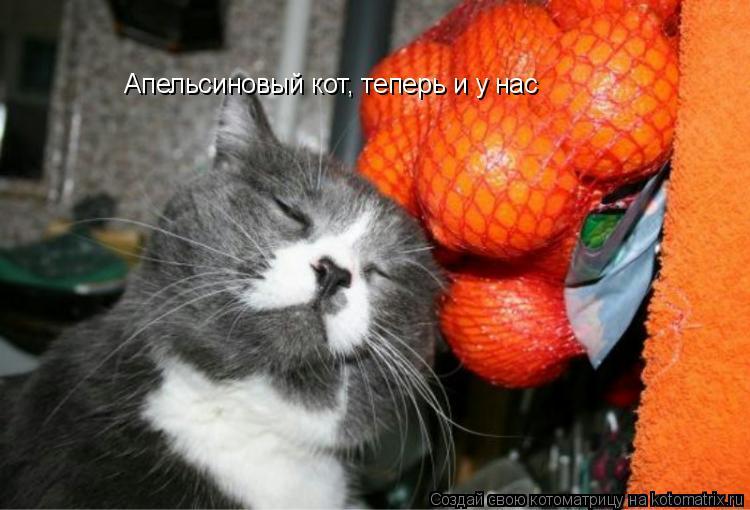 Котоматрица: Апельсиновый кот, теперь и у нас