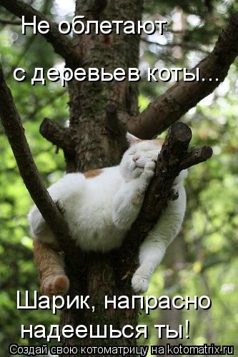 Котоматрица: Не облетают  с деревьев коты... Шарик, напрасно надеешься ты!