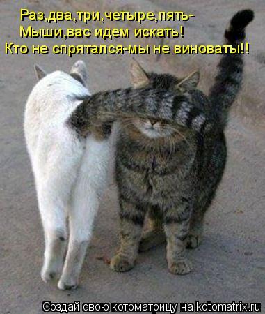 Котоматрица: Раз,два,три,четыре,пять- Мыши,вас идем искать! Кто не спрятался-мы не виноваты!!