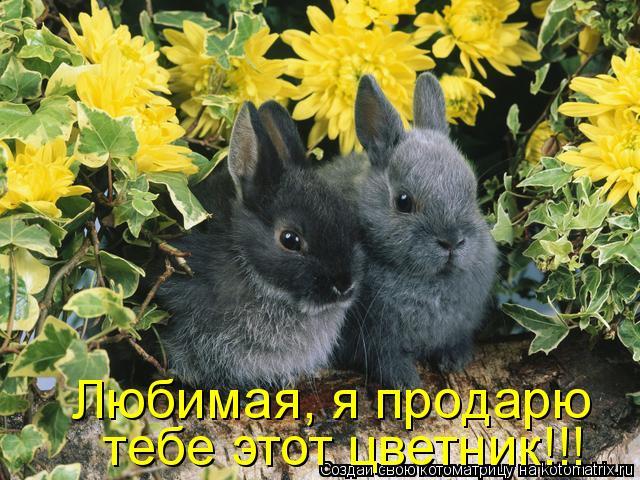 Котоматрица: Любимая, я продарю  тебе этот цветник!!!