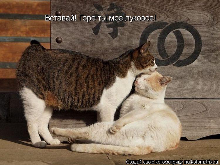 Котоматрица: Вставай! Горе ты мое луковое!