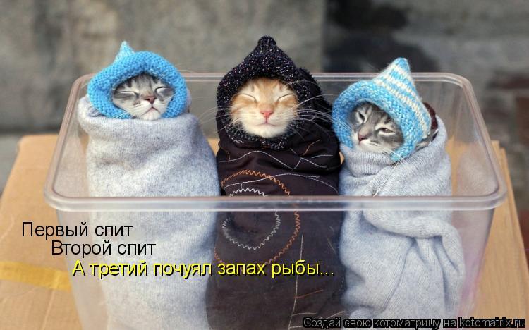 Котоматрица: Первый спит Второй спит А третий почуял запах рыбы...