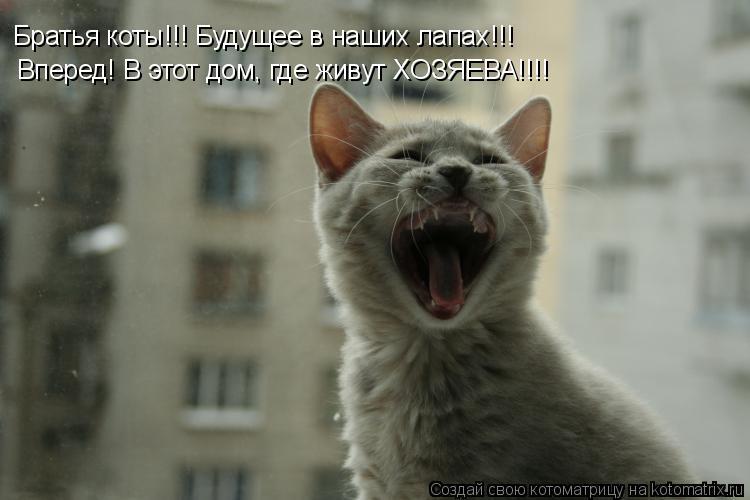 Котоматрица: Братья коты!!! Будущее в наших лапах!!! Вперед! В этот дом, где живут ХОЗЯЕВА!!!!