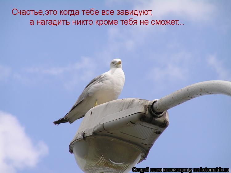 Котоматрица: Счастье,это когда тебе все завидуют, а нагадить никто кроме тебя не сможет...