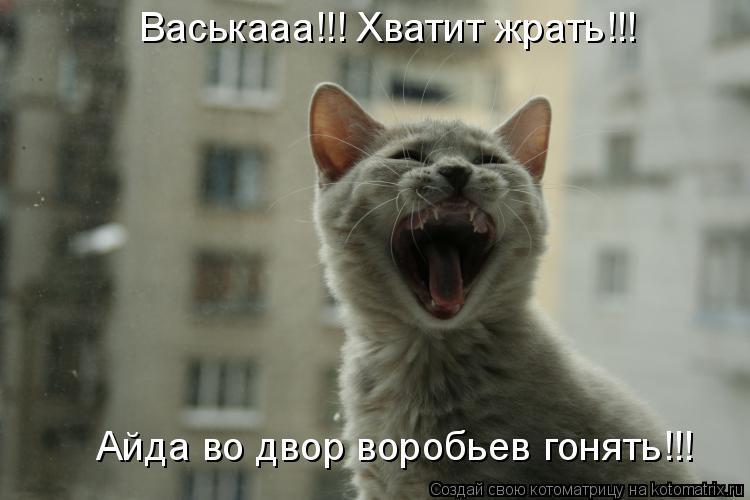 Котоматрица: Васькааа!!! Хватит жрать!!!  Айда во двор воробьев гонять!!!