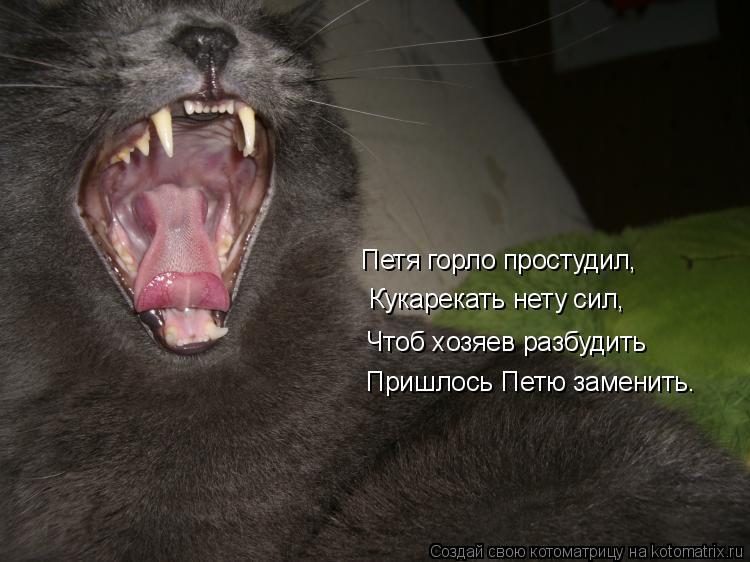 Котоматрица: Петя горло простудил,   Кукарекать нету сил, Чтоб хозяев разбудить Пришлось Петю заменить.