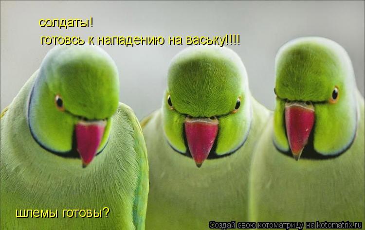 Котоматрица: солдаты! шлемы готовы? готовсь к нападению на ваську!!!!