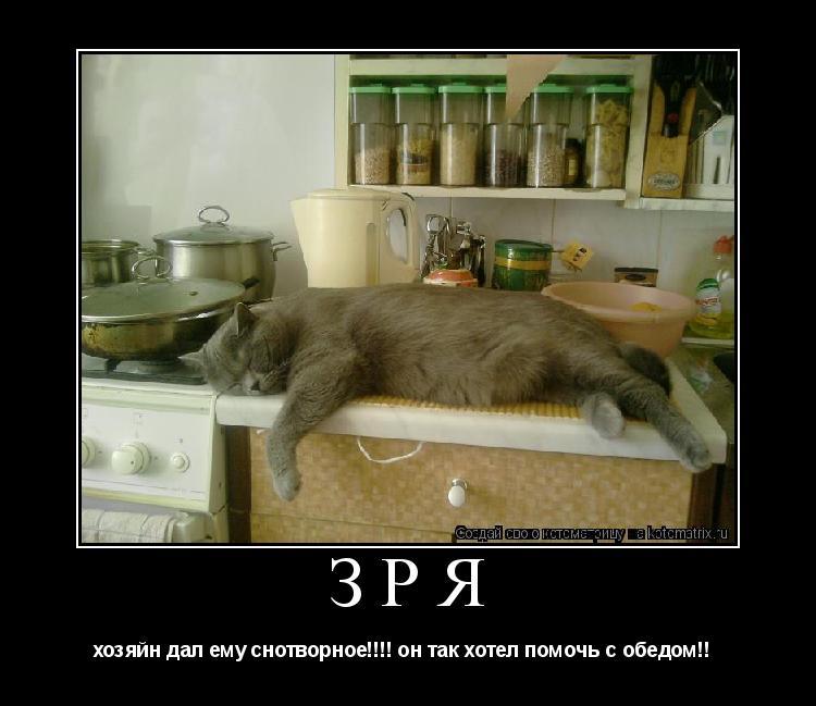 Котоматрица: ЗРЯ  хозяйн дал ему снотворное!!!! он так хотел помочь с обедом!!