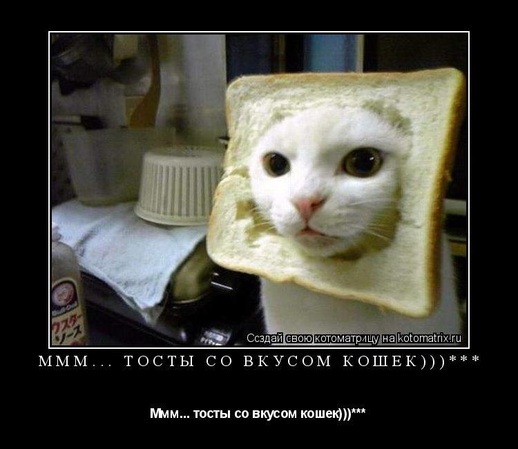 Котоматрица: Ммм... тосты со вкусом кошек)))*** Ммм... тосты со вкусом кошек)))***