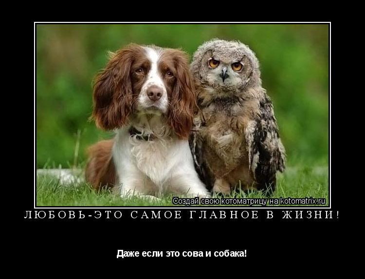 Котоматрица: Любовь-это самое главное в жизни! Даже если это сова и собака!