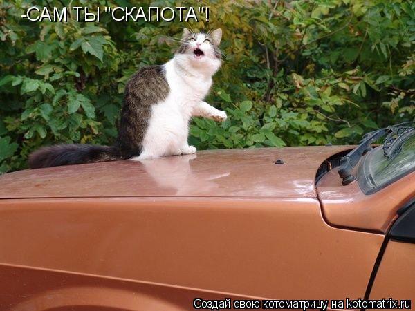 """Котоматрица: -САМ ТЫ """"СКАПОТА""""!"""