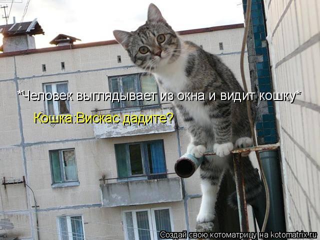 Котоматрица: *Человек выглядывает из окна и видит кошку* Кошка:Вискас дадите?
