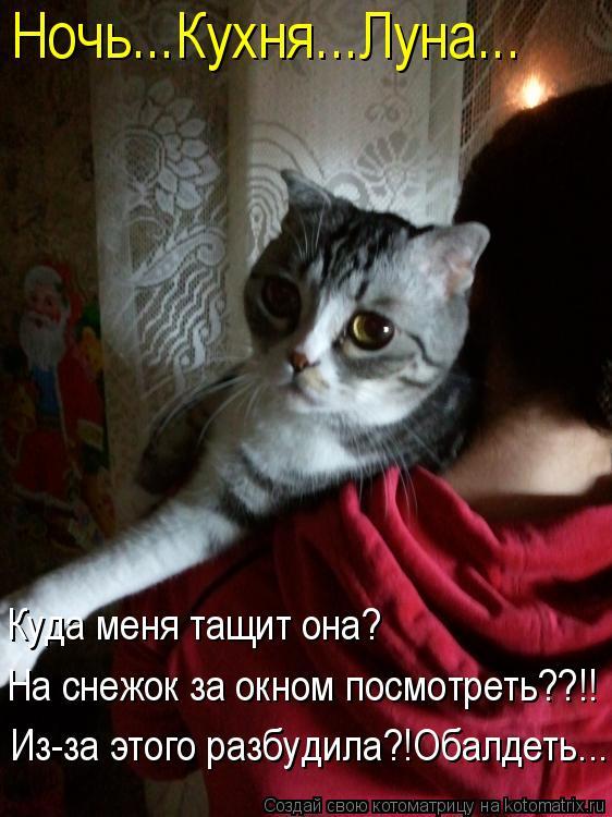 Котоматрица: Ночь...Кухня...Луна... Куда меня тащит она? На снежок за окном посмотреть??!! Из-за этого разбудила?!Обалдеть...